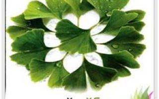 Гинкго билоба — древнейшее растение с широким спектром лечебных свойств