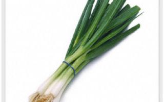 Зеленый лук — здоровью друг!
