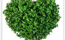 Что означает зеленый цвет? Лечение зеленым цветом!