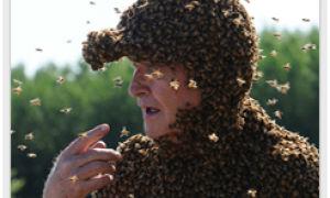 Первая помощь при укусе насекомых летом