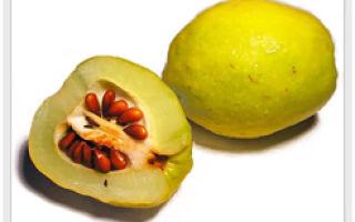 Удивительный плод айва и его полезные свойства