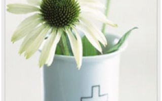 Лечебные травы: горчица полевая, дымянка лекарственная, клевер полевой, шалфей