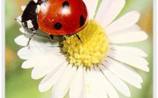Вы удивитесь, узнав, что эти растения обладают целебными свойствами!