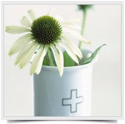 Лютики-цветочки2