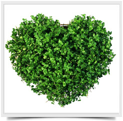 Зеленый-цвет